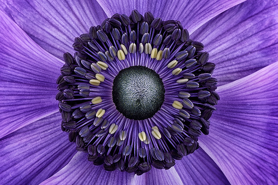 Photograph Anemone by Mark Johnson on 500px