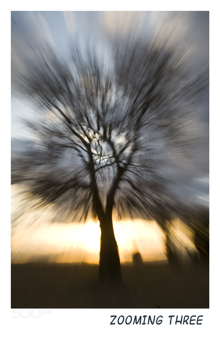 Photograph Zooming tree 2 by Geert Van der Straeten on 500px