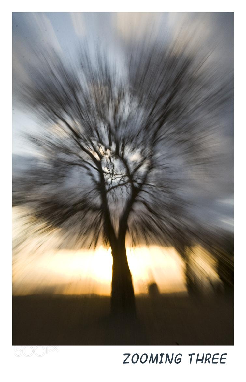 Photograph Zooming tree 2 by Geert Van der Straeten on 500px