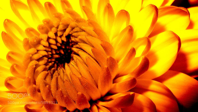 Photograph flower. by umut sinan taşkın on 500px