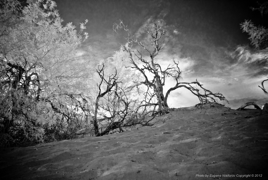 Photograph Eureka Dunes, Death Valley (infrared) by Eugene Nikiforov on 500px
