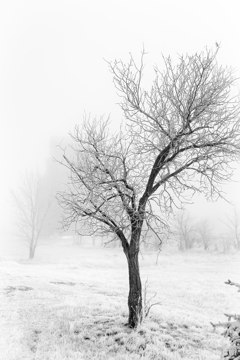 Photograph March Morning - Still Winter by Rosana Ramos on 500px