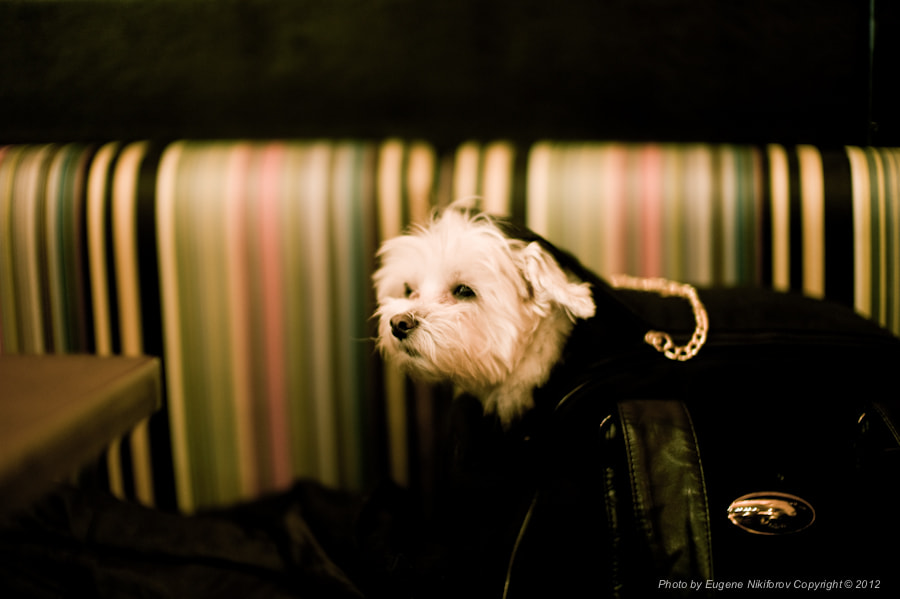 Photograph A dog in the bar by Eugene Nikiforov on 500px