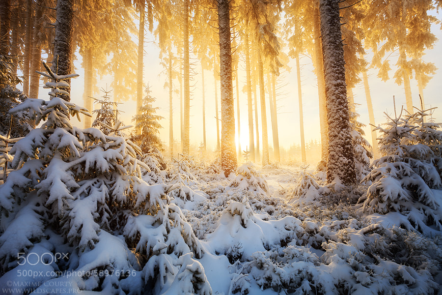 Photograph Early Winter's Magnificence by Maxime Courty on 500px