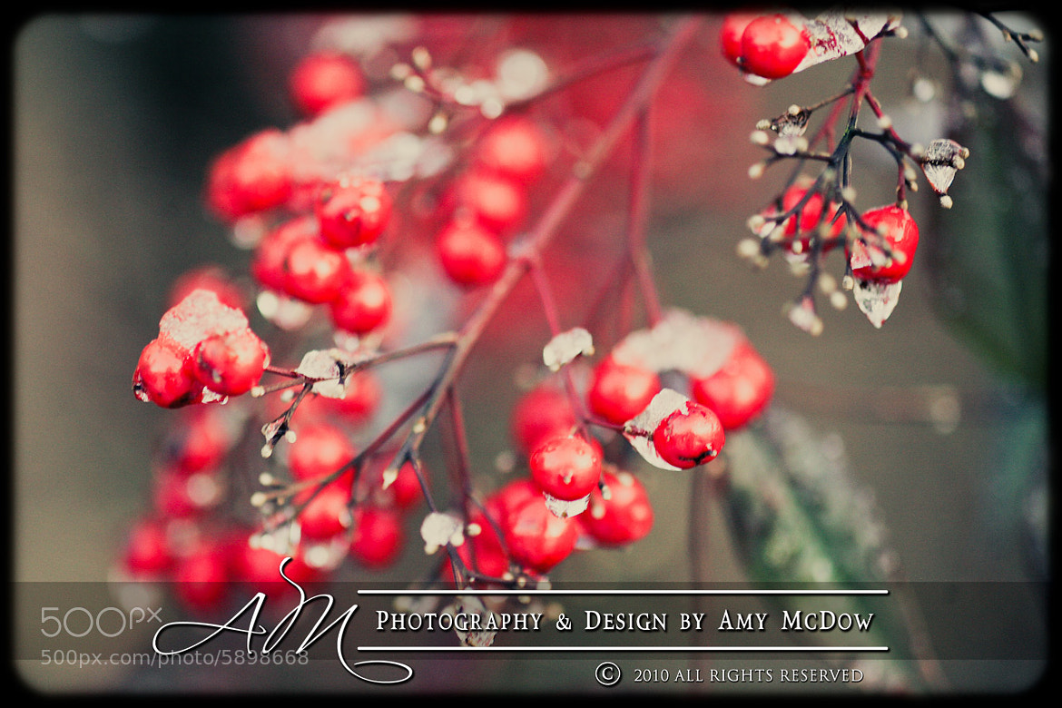 Photograph Last Touch of Winter by Amy McDow on 500px