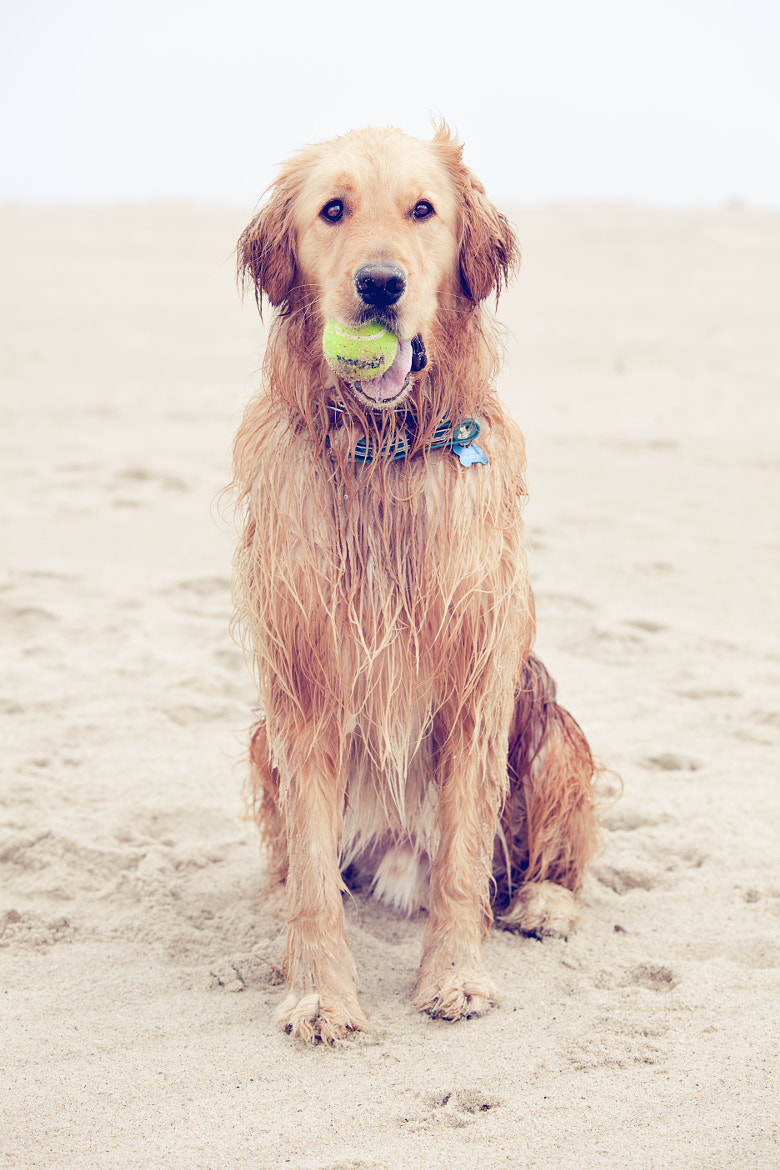 Photograph Chatham Beach Dog. by Andrea Spence on 500px