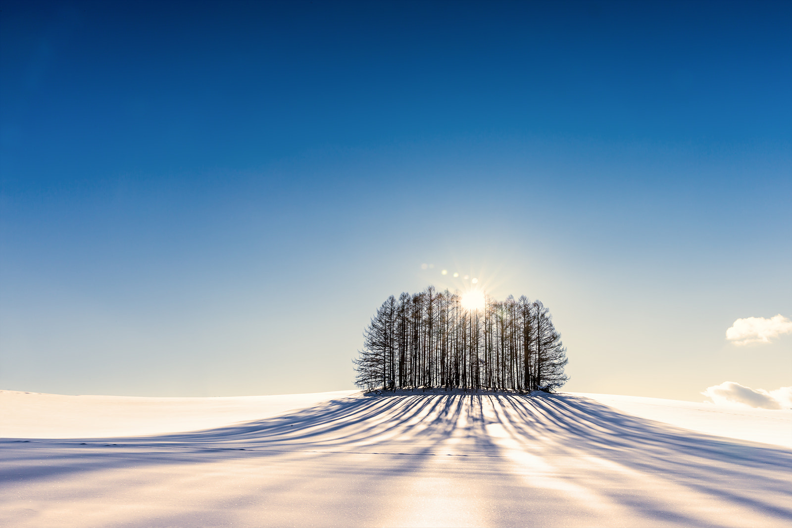 Photograph Tree by Venti Lee on 500px