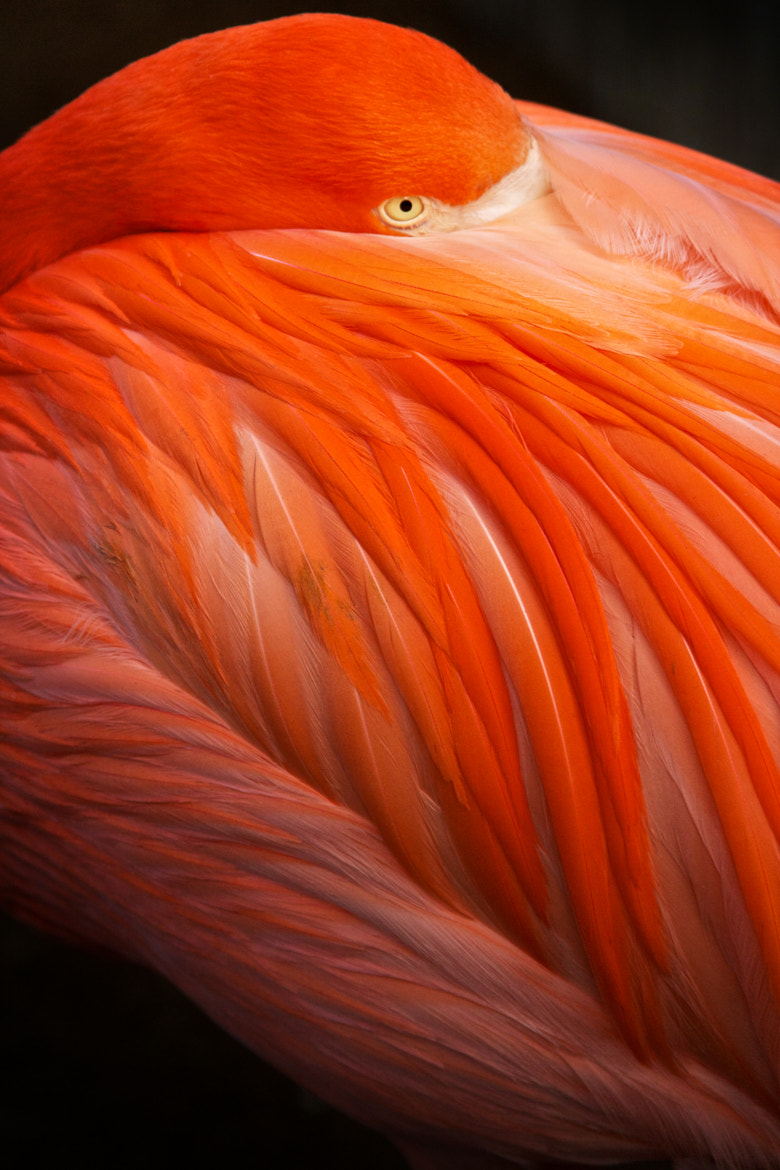 Photograph Abstract Flamingo I by Vergil Kanne on 500px