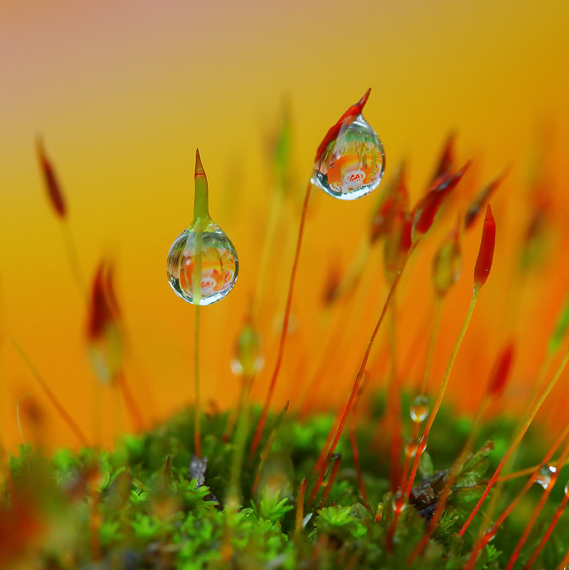 Photograph Fresh Orange by Diens Silver on 500px