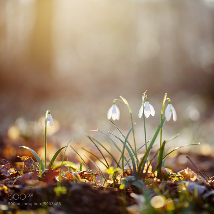 Photograph Spring by Martin Rak on 500px