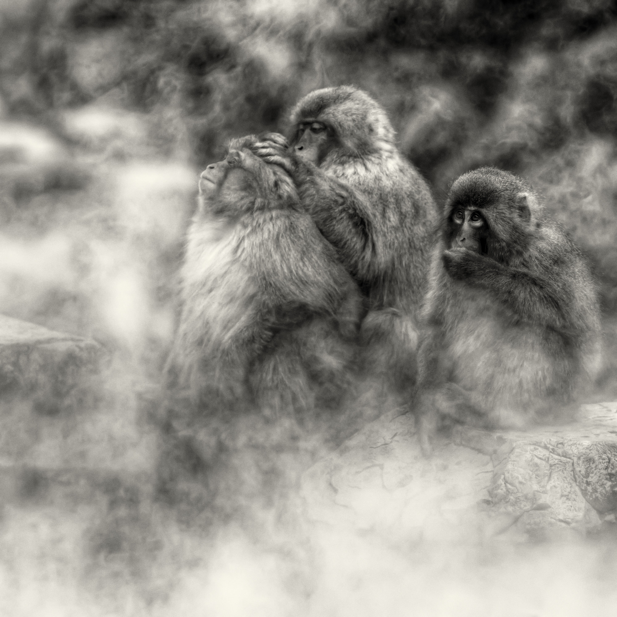 Photograph Into a misted up world by regis boileau on 500px