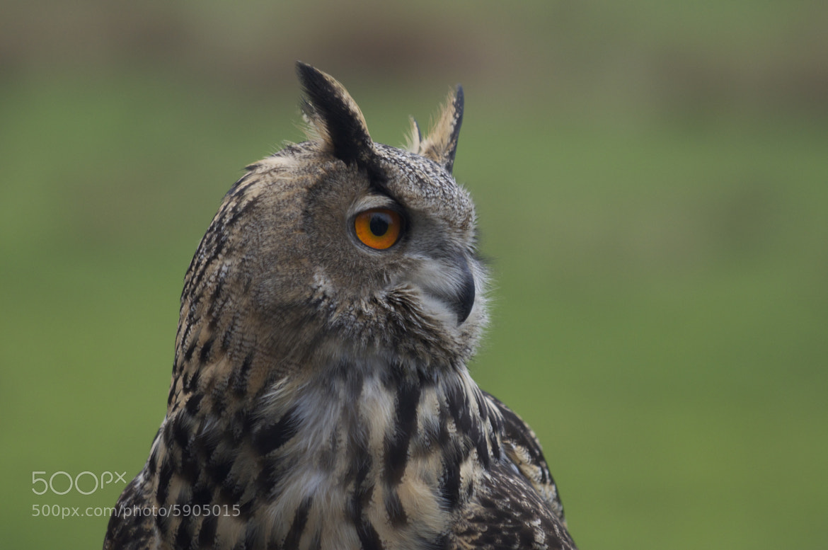 Photograph owl by Michael Xornot on 500px