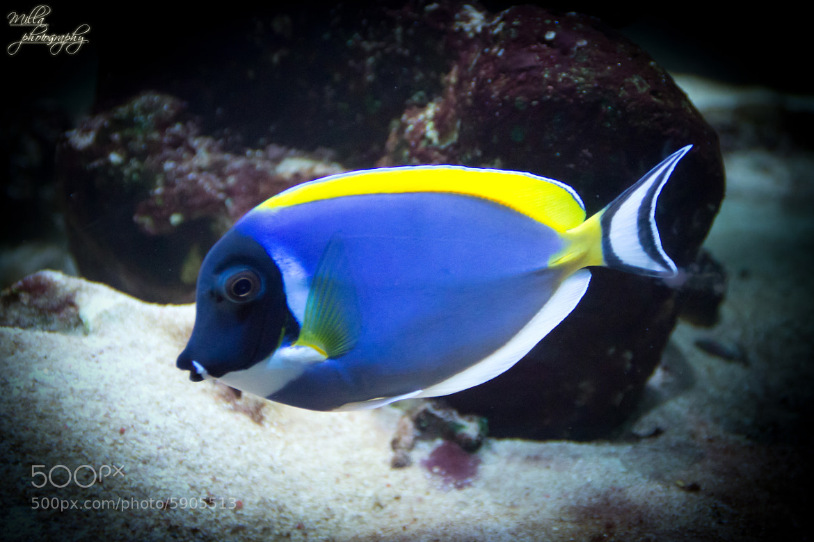 Pin dory the fish tumblr on pinterest for Picture of dory fish