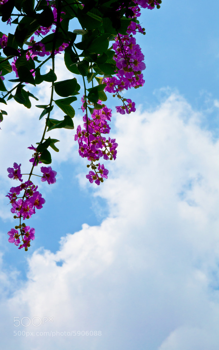 Photograph Flowers with the sky by Pitukchai Muanglek on 500px