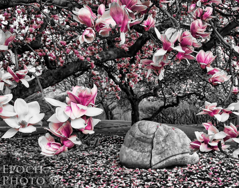 Photograph Almost Blossom Time by Bob Vishneski on 500px