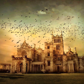 Lyndhurst Estate by Jessica Jenney (jjenney)) on 500px.com