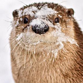 Snow Day by John Haig (haig) on 500px.com