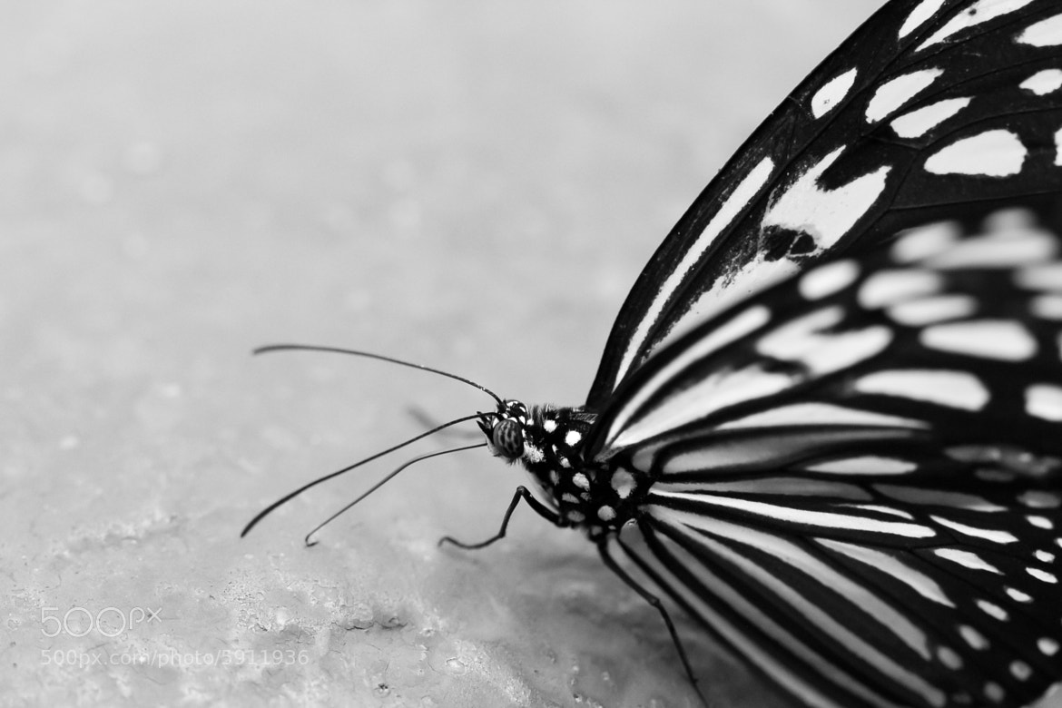Photograph Butterfly by Bharath Ravichandran on 500px