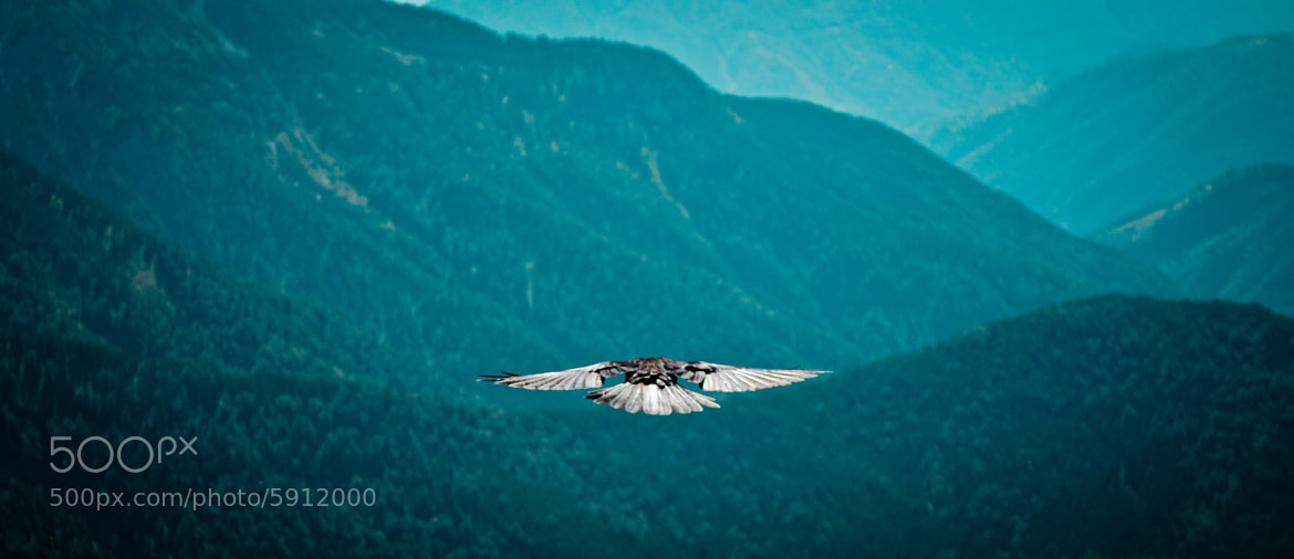 Photograph Dohle's freedom by M K on 500px