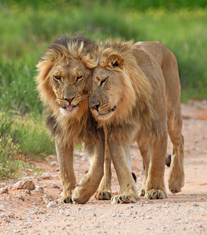 Photograph Brothers by Stephen Earle on 500px
