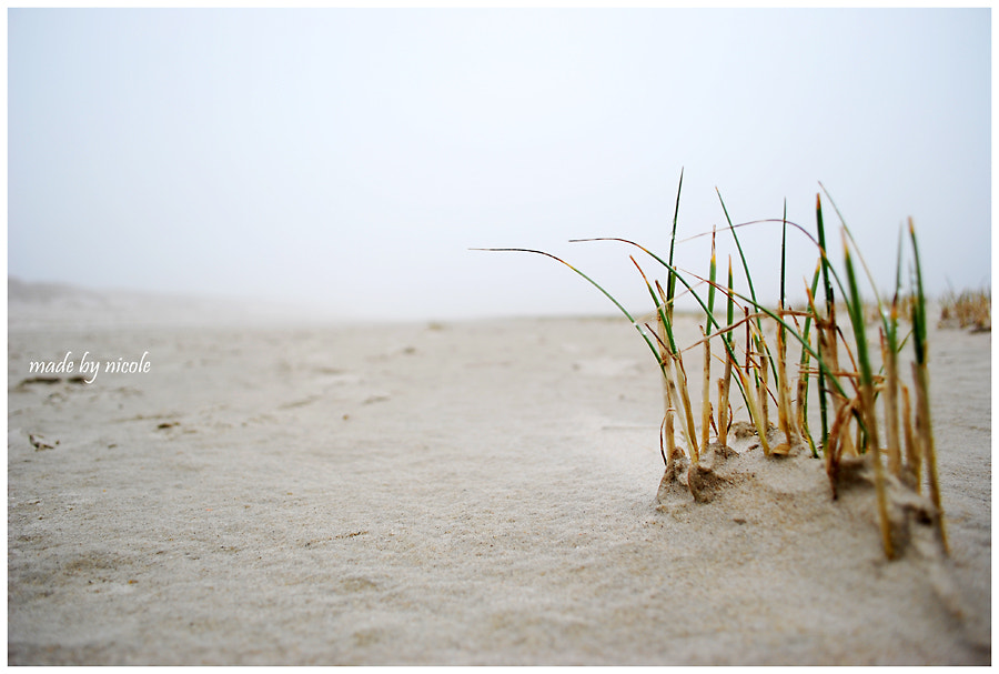 Photograph Nordsee by made by nicole on 500px