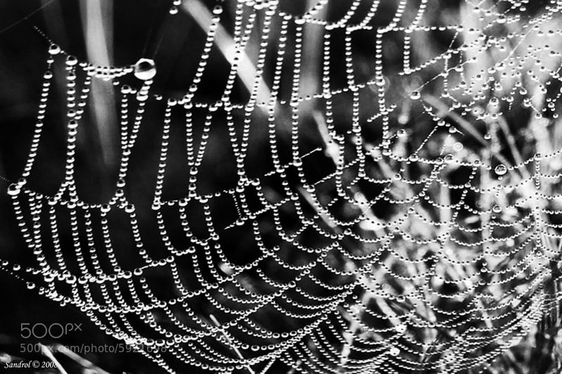 Photograph Pearls of dew by Sandro L. on 500px