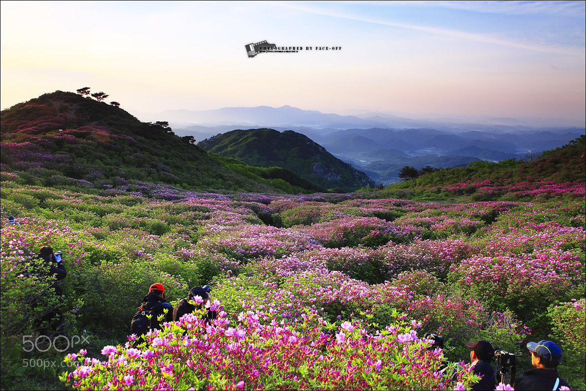 Photograph beautiful korea - spring-3 by lyu choong luyl on 500px
