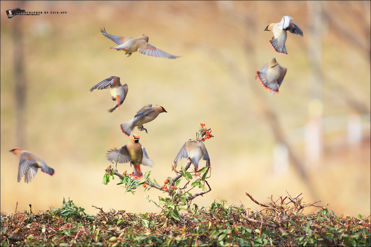 Photograph beautiful korea - fly by lyu choong luyl on 500px