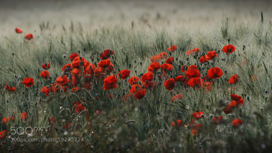 Photograph Red   by Franka . on 500px