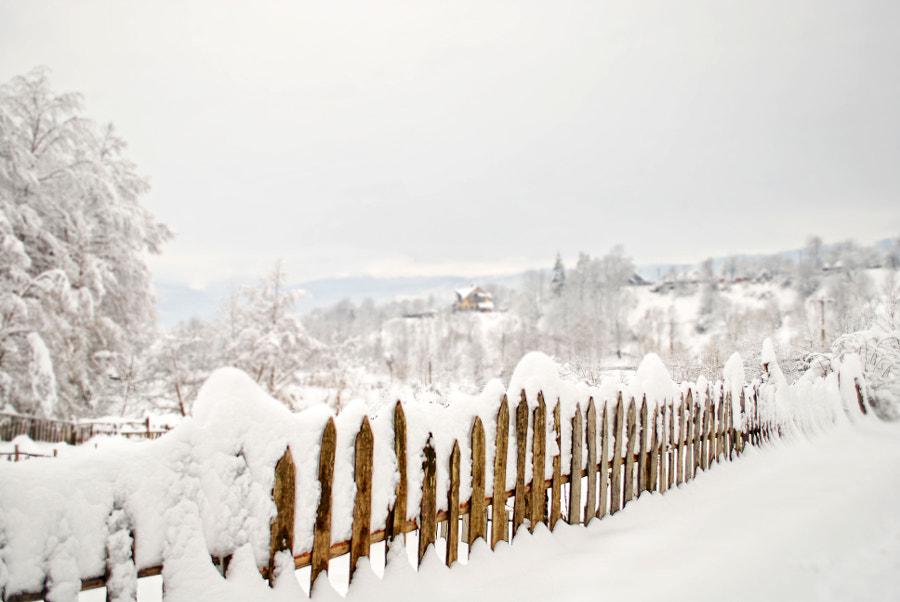 Winter is Here, автор — Sergiu Parsoaga на 500px.com