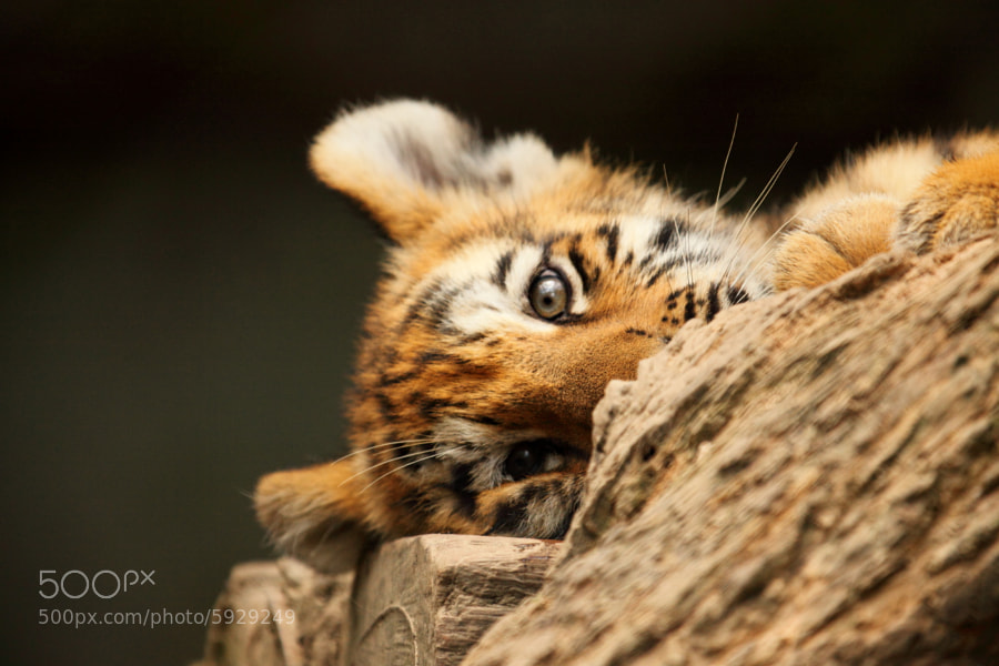 Photograph PeekaBoo by Ken Shimo on 500px