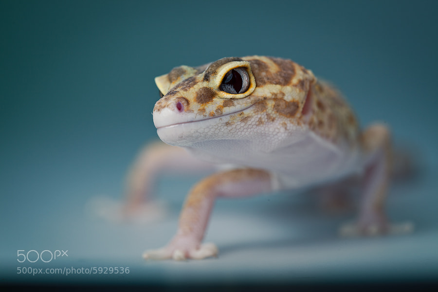 Photograph Did you say crickets? by Albert Manduca on 500px