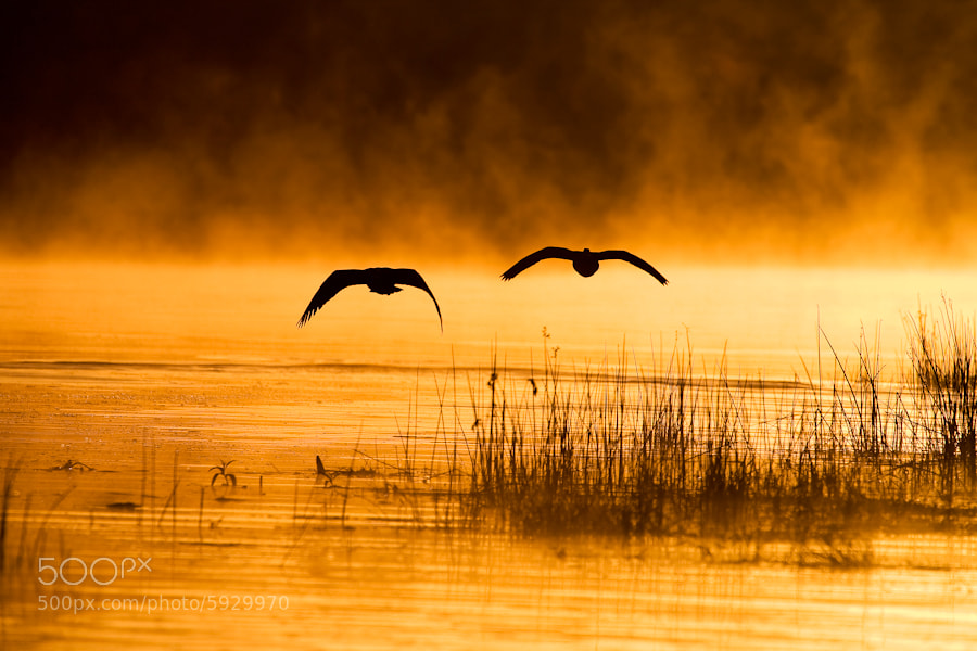 Photograph Birds On Time by Mario Moreno on 500px