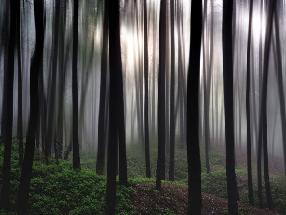 Photograph Forest by Daniela Gulda on 500px