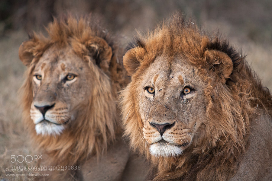 Photograph Power Of Two! by Grant Atkinson on 500px