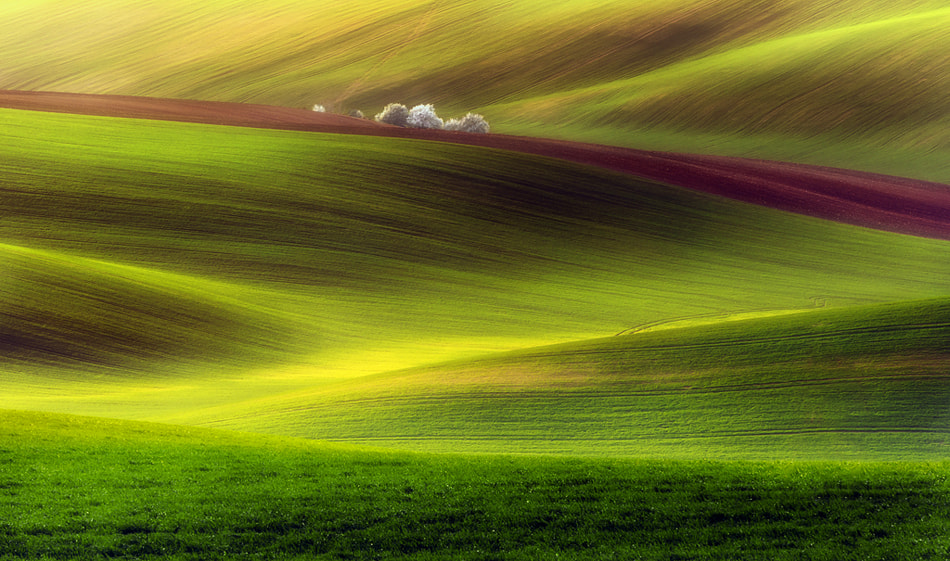 Photograph Golden fields by Piotr Krol on 500px