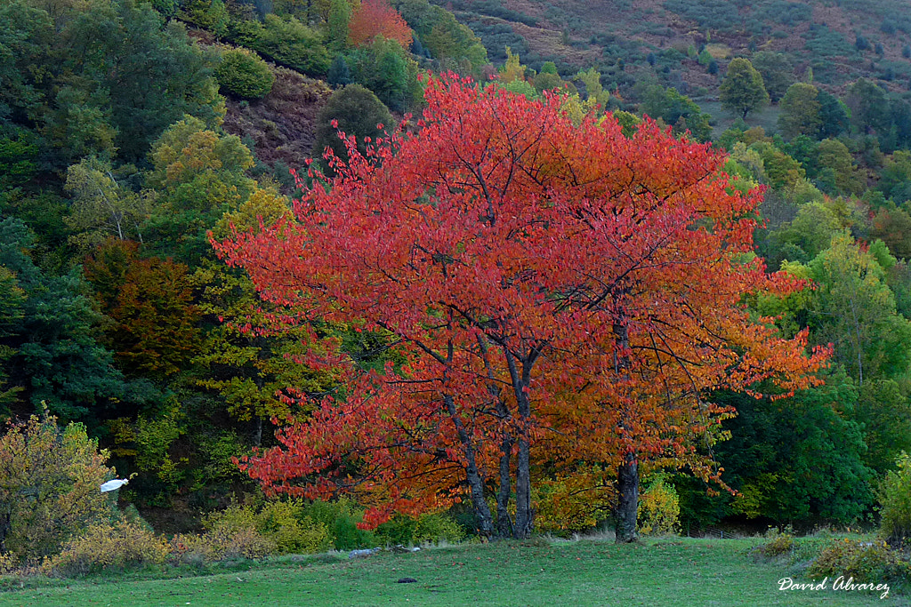 Photograph Red fall by David Alvarez on 500px