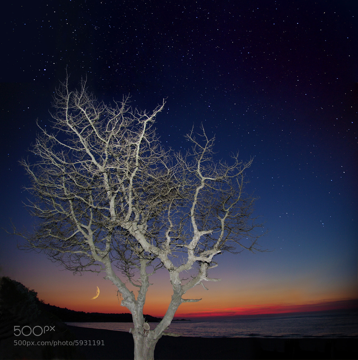Photograph The tree of the sunset by Jose Antonio Montoya on 500px