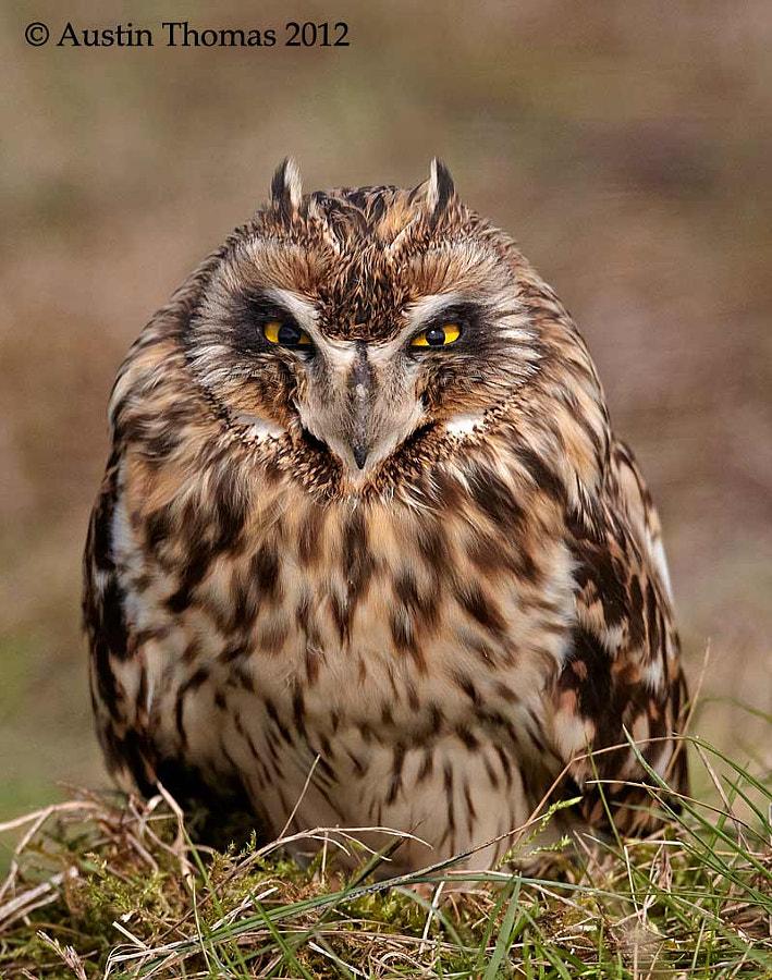 Grumpy Owl...