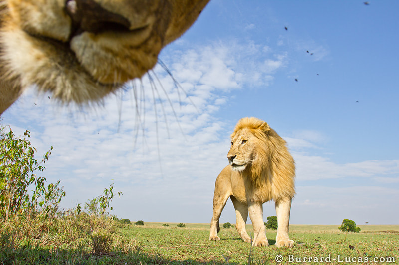 Photograph Photobomb by Will Burrard-Lucas on 500px