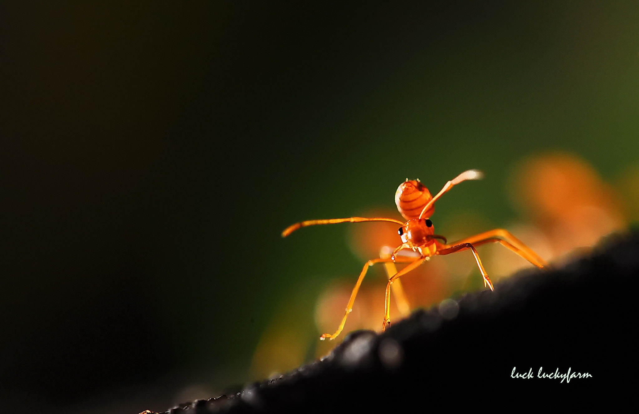 Photograph Fighter!! by Luck Luckyfarm on 500px