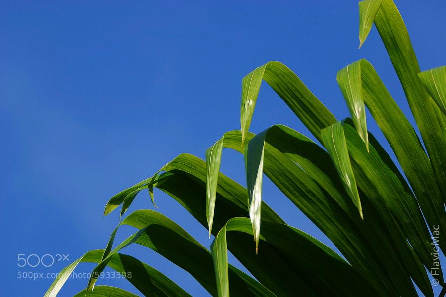 Photograph plants by Flavio Mac on 500px
