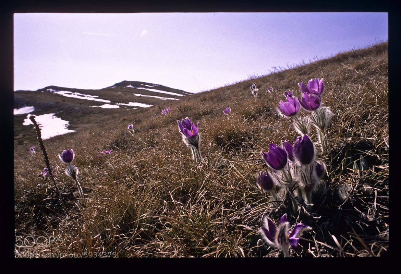 Photograph Let the spring begin by Mihail Bidnichenko on 500px