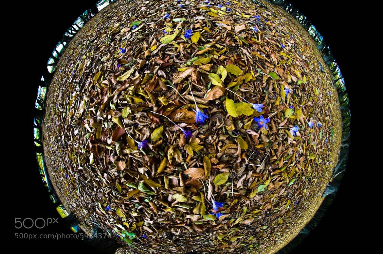 Photograph Crocus Planet by Mihail Bidnichenko on 500px