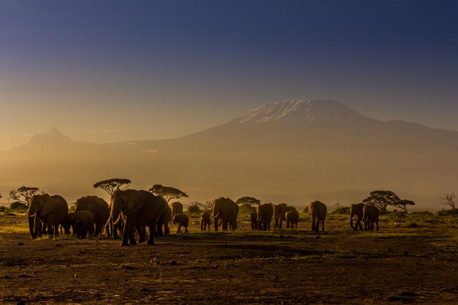 Elephant family by Bruce Mounde on 500px.com