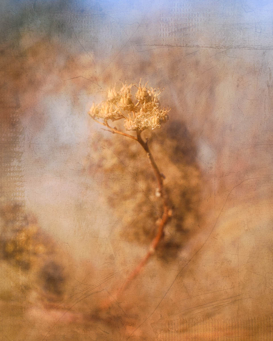 Photograph Spirea by Chris Drew on 500px