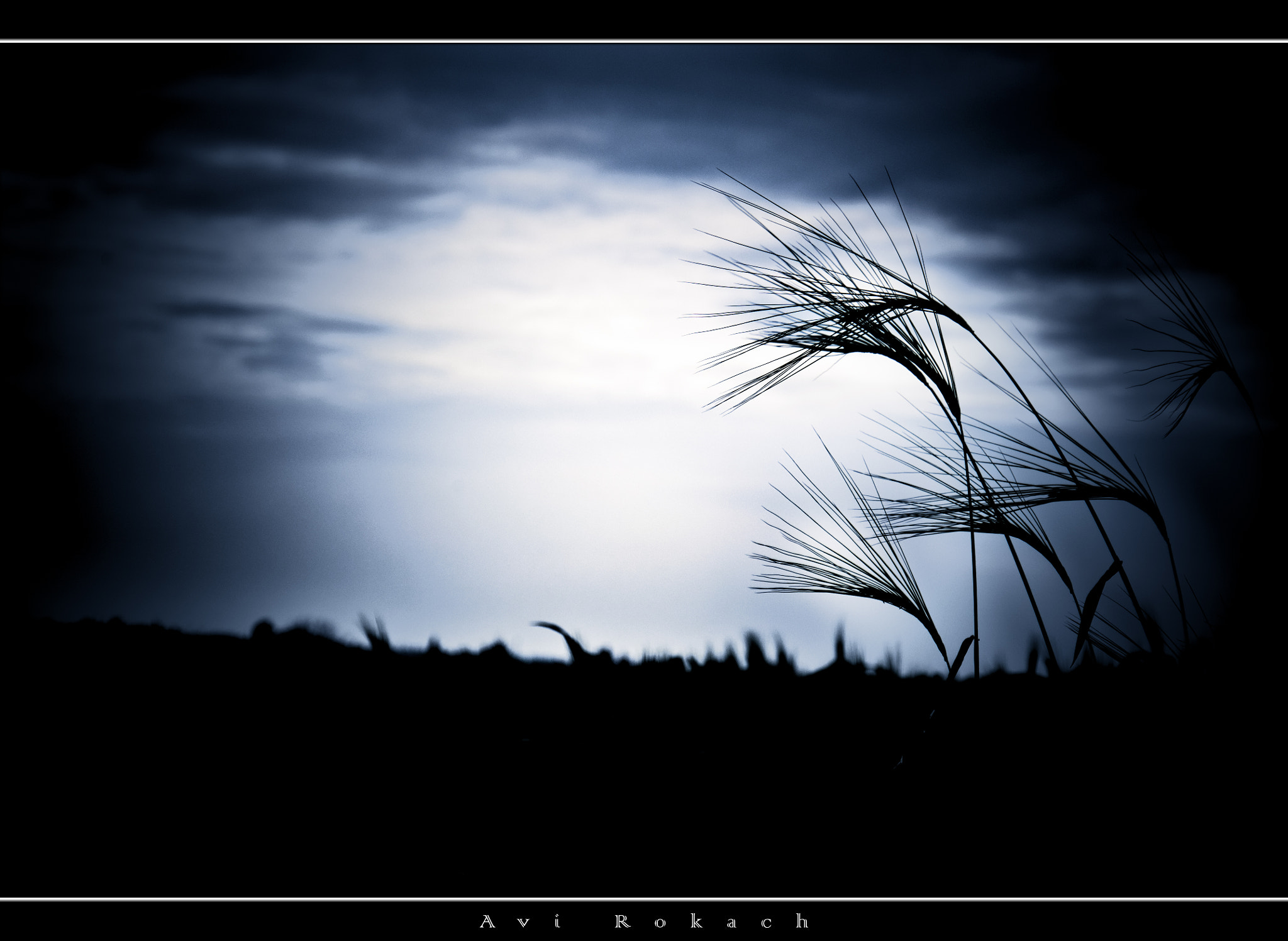 Photograph Shadows Wheat by avi rokach on 500px