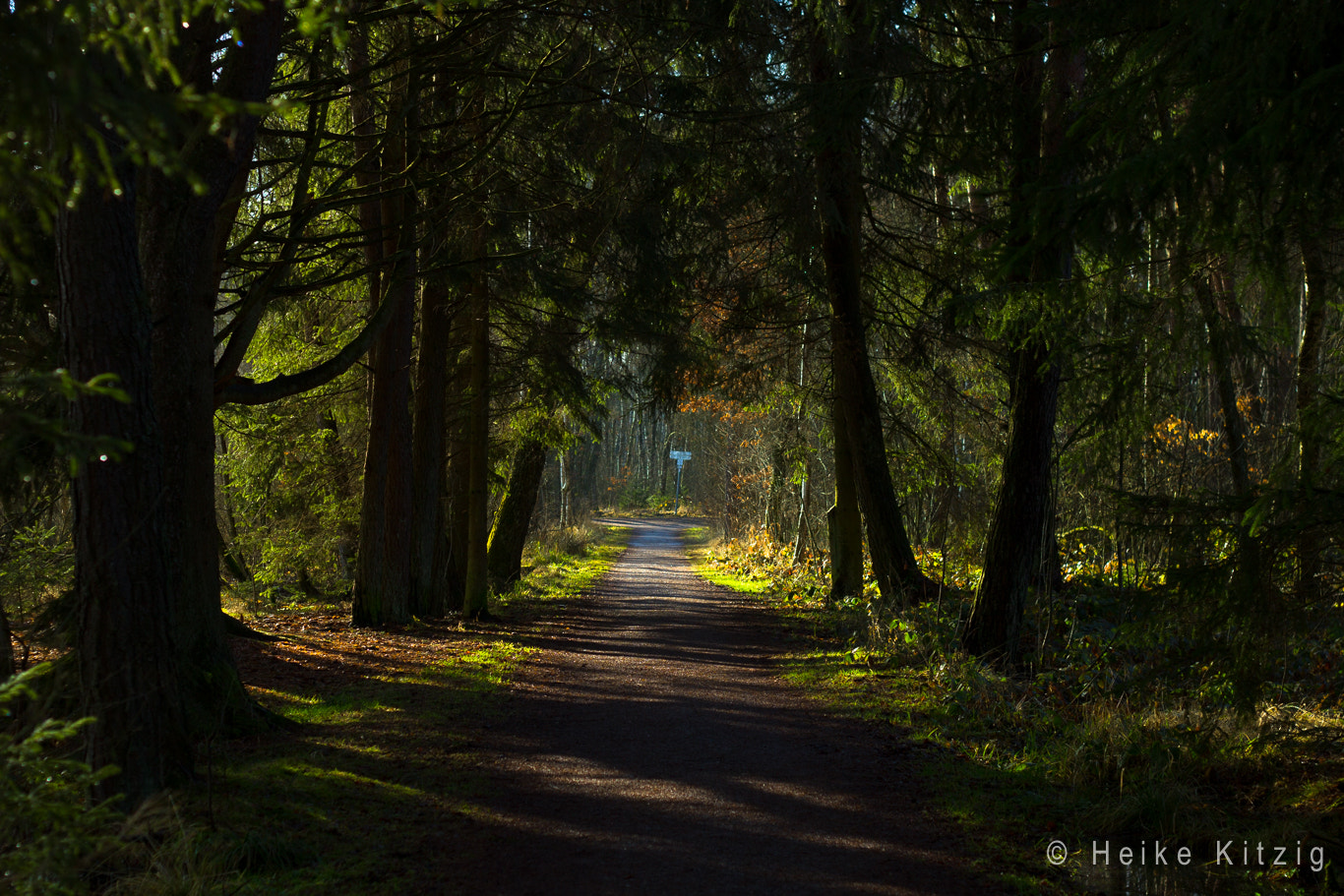 Photograph Way in Moss in Schwenningen Germany by Heike Kitzig on 500px