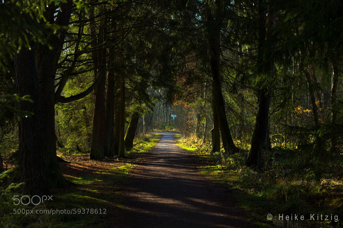 Photograph Way in Moss in Schwenningen Germany by Heike Kitzig on 500px