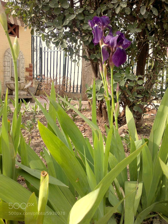 Photograph Iris  by Nedjma Kateb on 500px